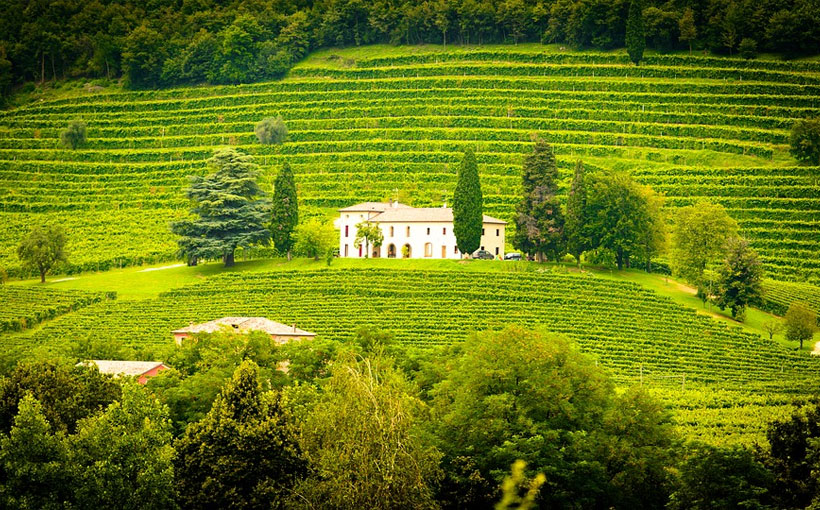 7-Wine-Regions-in-New-Zealand-you-Need-to-Visit